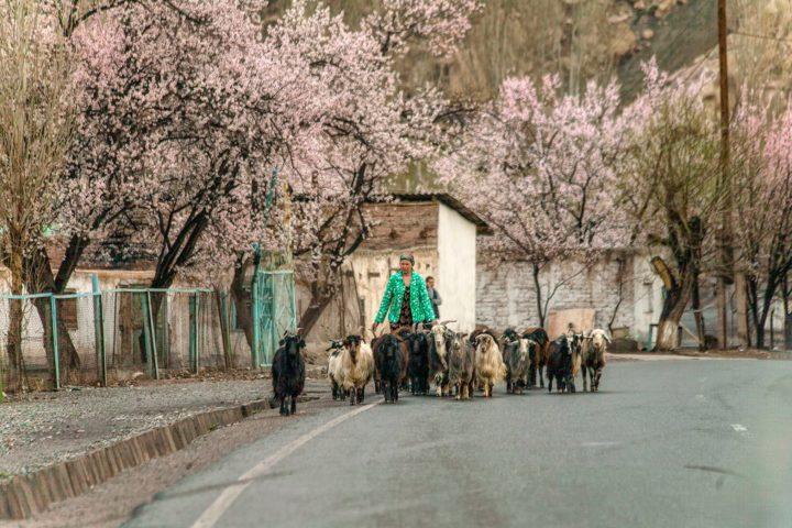 6.Весна. Таджикистан. Фото Акмал Усманов