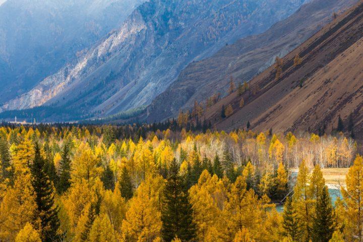 7. Осенние цвета