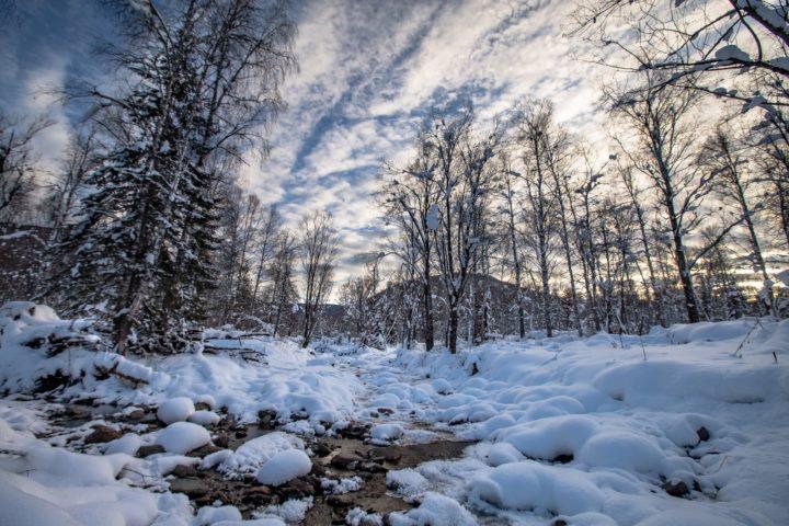 1. Засыпанная снегом тайга