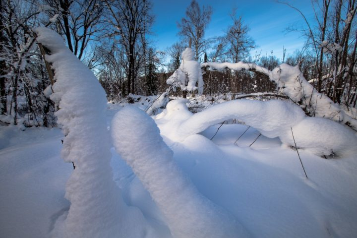 1. Зима в тайге