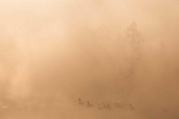 1. день поездка к лебедям (10)