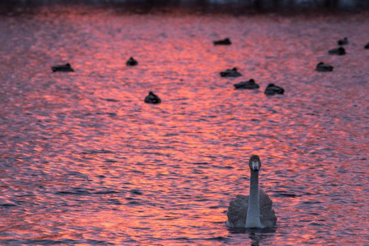 1. день поездка к лебедям (3)