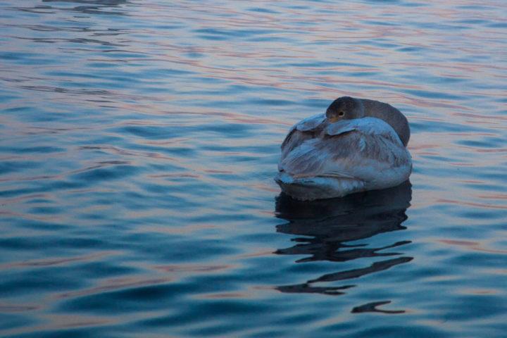1. день поездка к лебедям (6)