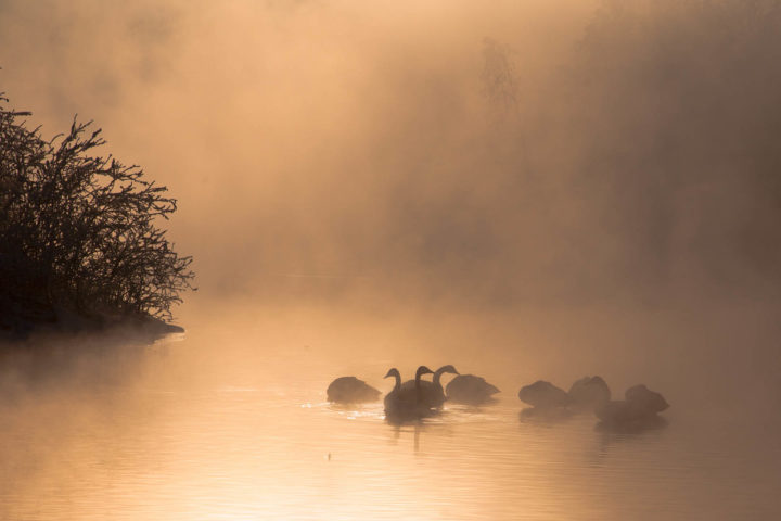 1. день поездка к лебедям (9)