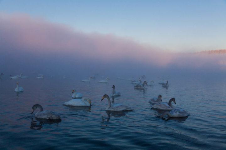 1. лебеди