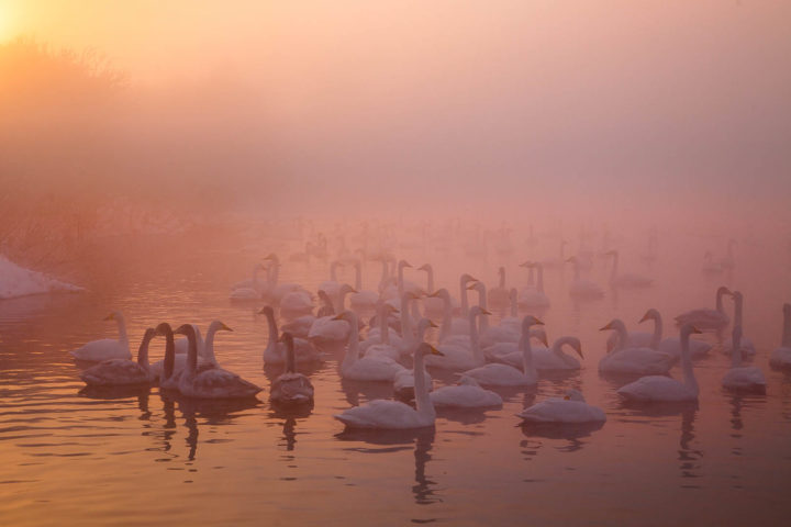 1. утро на озере