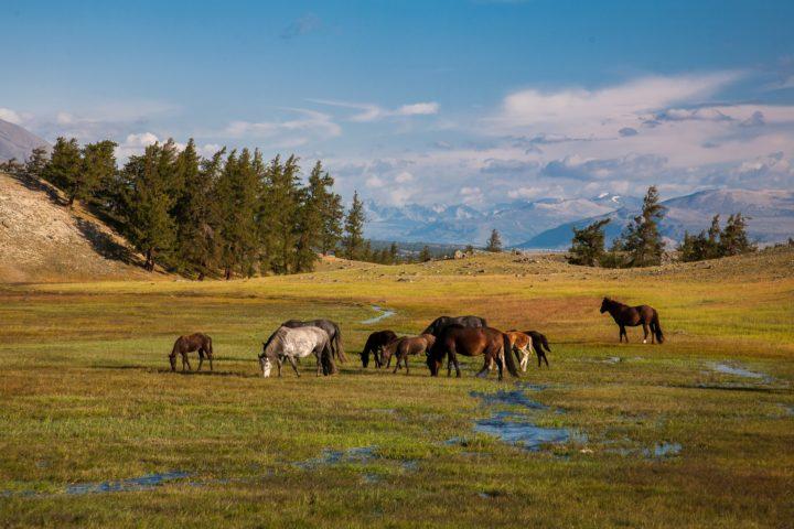 3. Монголия