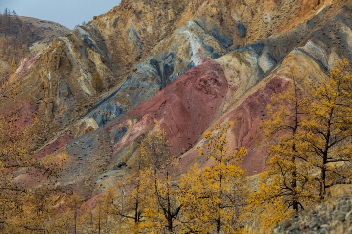 Altay. Mountains. Golden autumn. Blue sky.