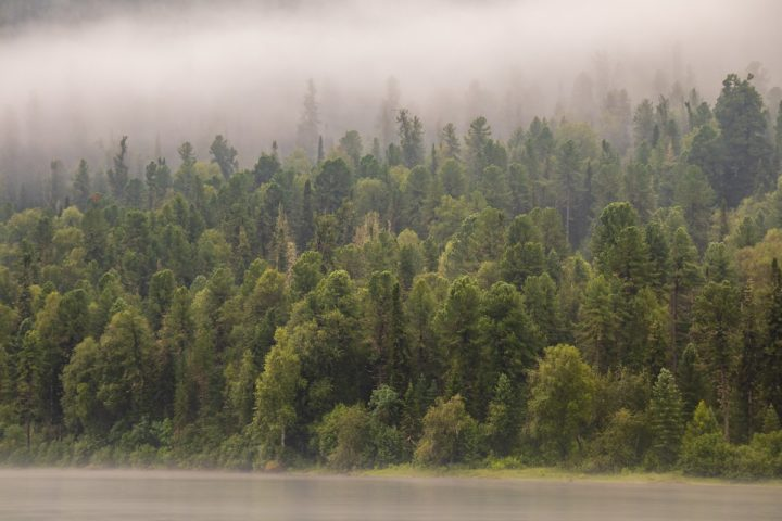 1. Берега Телецкого озера