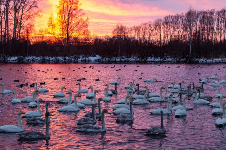 1. Лебединое озеро